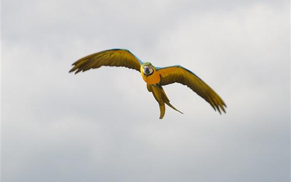 Fond d'écran Parrot vol, ailes, ciel