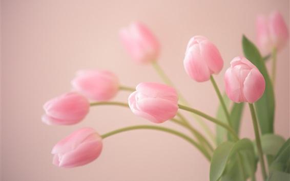 Wallpaper Pink flowers, tulips close-up, bokeh