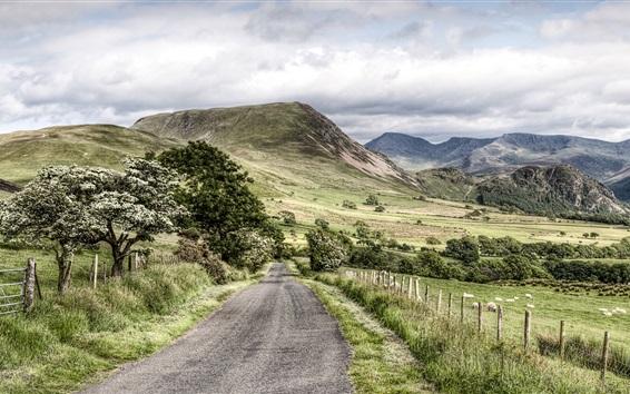 Wallpaper Road, trees, mountains, Lake District National Park, Cumbria, UK