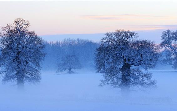 Wallpaper Snow covered trees, mist, dusk, winter, France