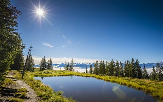 Wallpaper Summer, Austria, lake, grass, trees, sun, blue sky
