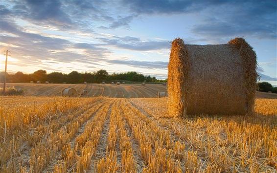 Обои Лето, поле фермы, сено, облака, закат