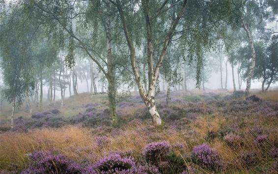 Wallpaper Summer, morning, birch, trees, grass, fog
