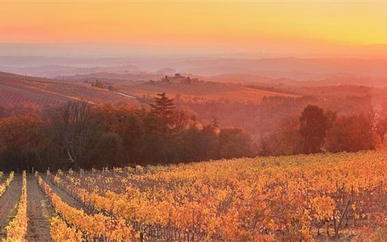 Wallpaper Sunset, dusk, vineyard, Siena, Tuscany, Italy