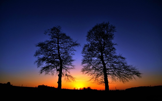 Wallpaper Sunset, trees, glow, silhouette