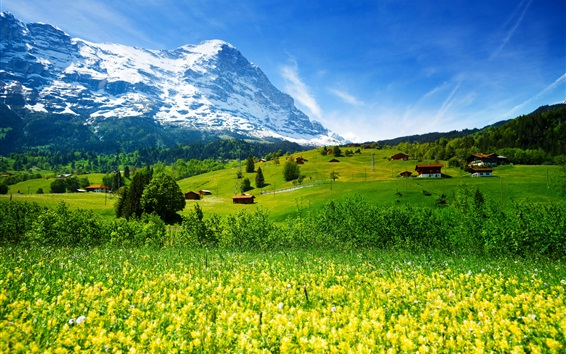 Wallpaper Switzerland, mountains, glacier valley, grass, wildflowers, house