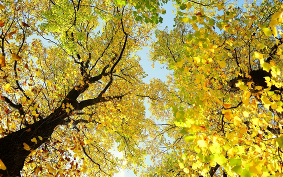 Wallpaper Trees, branches, crown, yellow leaves, beautiful autumn