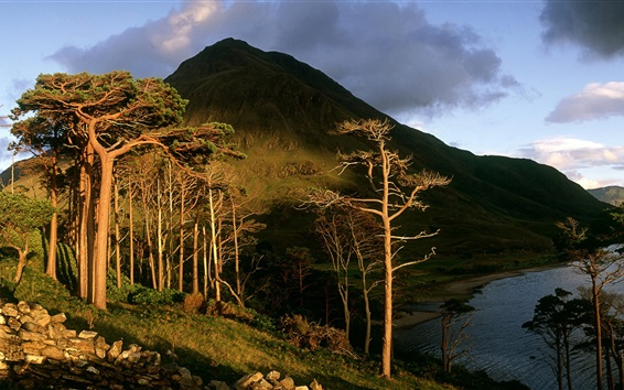 Wallpaper Trees, clouds, lake, County Mayo, Connacht Province, Ireland