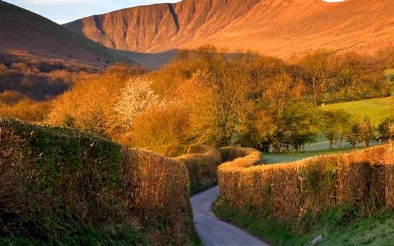 Обои Деревья, дороги, горы, Брекон маяки, Уэльс, Великобритания
