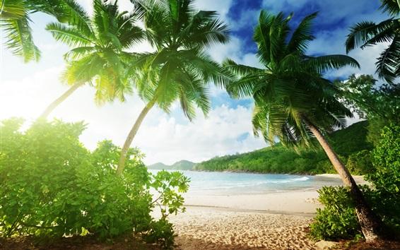 Fond d'écran plage tropicale, palmiers, sable, mer, côte, nuages