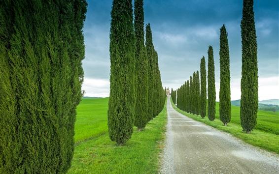 Обои Тоскана, Италия, дорога, трава, кипарис