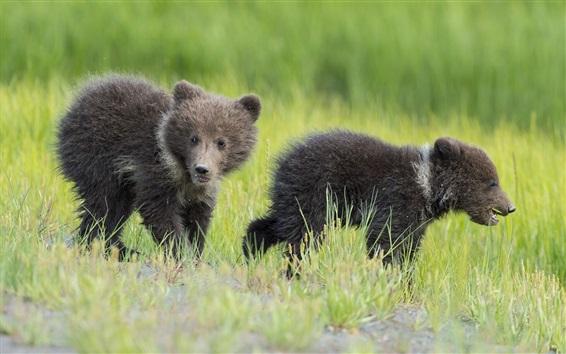 Papéis de Parede Dois ursos, filhotes, crianças, grama
