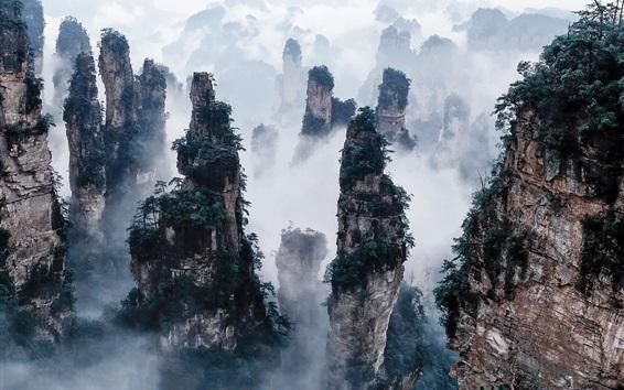 Обои Чжанцзяцзе Национальный лесной парк, Китай, скалы, горы, туман