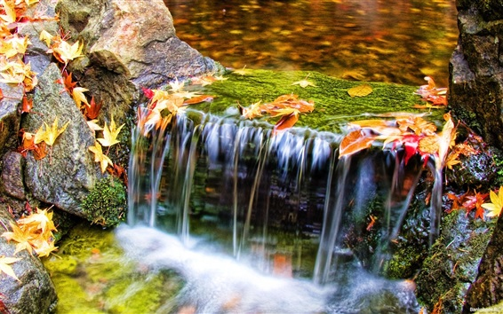 Wallpaper Autumn nature, stream, water, leaves
