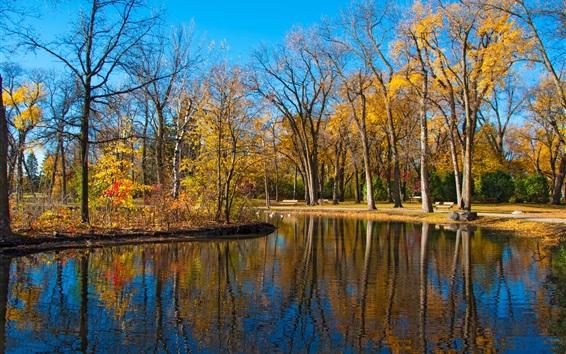 Обои Осенний парк, деревья, пруд, утки, желтые листья, синее небо