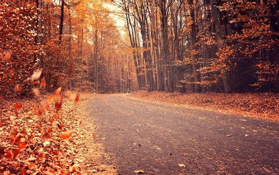 Обои Осень, деревья, красные листья, дорога