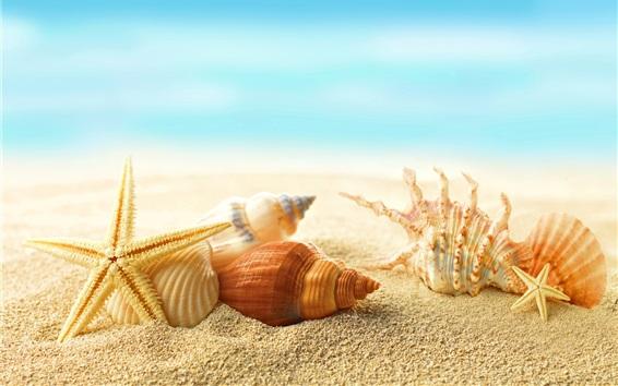 Обои Пляж, ракушек, морских звезд, солнце, лето