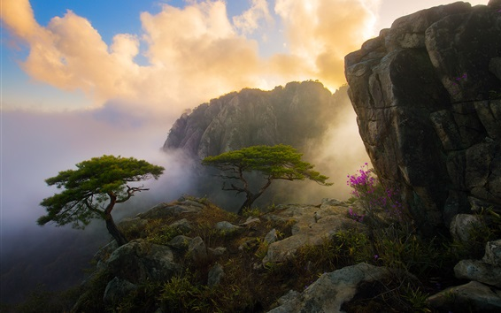 Wallpaper Beautiful morning in mountain top, clouds, flowers, trees, rocks, fog