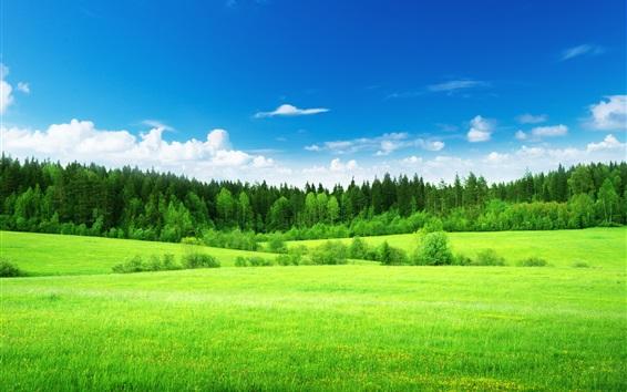 배경 화면 아름다운 자연 풍경, 필드, 푸른 잔디, 나무