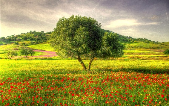 Wallpaper Beautiful nature, single tree, meadow, poppies, grass, slope