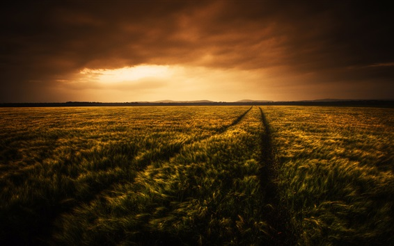 Wallpaper Beautiful wheat fields at evening, clouds