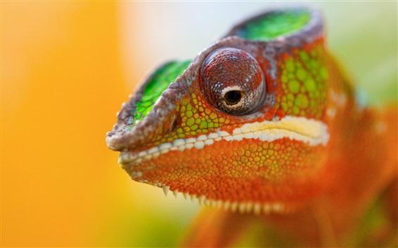 Wallpaper Chameleon head close-up, bokeh