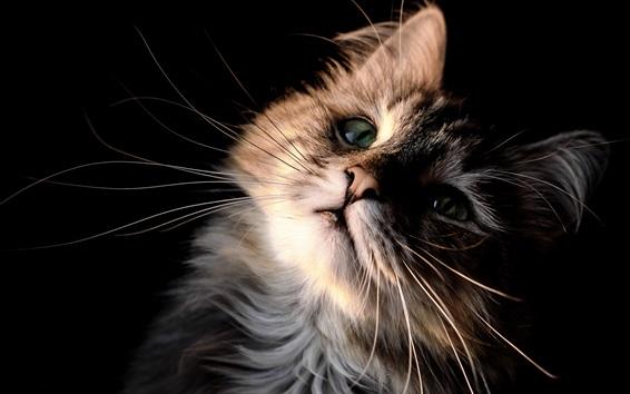 Wallpaper Cute kitten look up, snout, mustache, eyes, furry