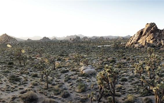 Fond d'écran Désert au coucher du soleil, les plantes, étang, Parc national de Joshua Tree, Californie, États-Uni