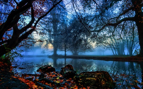 Wallpaper England, London, Morden Hall Park, trees, river, fog, autumn, dawn