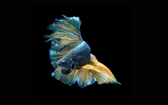 hintergrundbilder fisch schwarzer hintergrund - photo #1