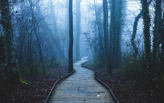 배경 화면 보도, 나무, 숲, 안개, 새벽