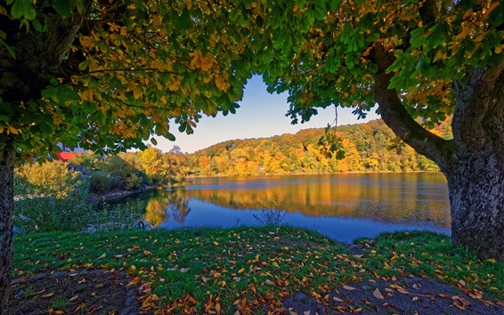Wallpaper Germany Ulmen in the autumn, trees, river, yellow leaves