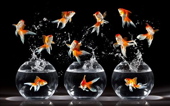 Papéis de Parede Goldfish dança, salto, respingo de água