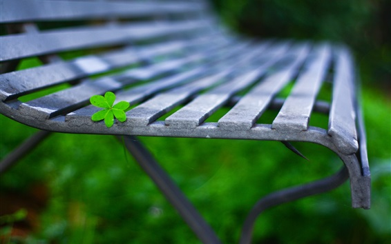 Wallpaper Green leaf, bench, bokeh, macro photography