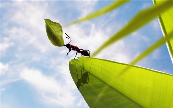 Wallpaper Insect ants, green leaves, clouds, blue sky