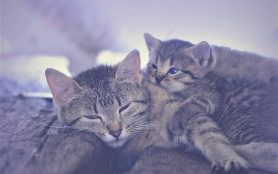 Wallpaper Kitten and motherhood sleeping