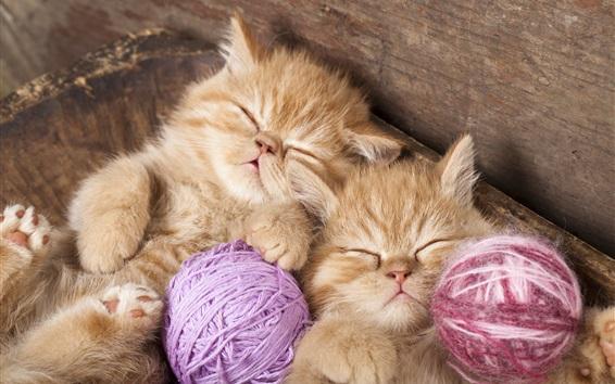 Обои Котята спать, пряжа шары