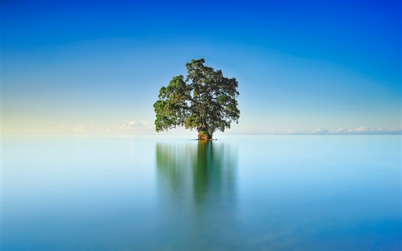 Wallpaper Lake, lonely tree, blue sky