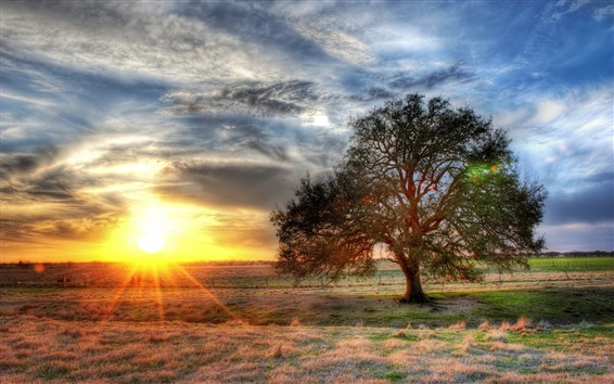Wallpaper Lonely tree, grass, sun rays, sunset, clouds