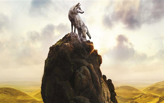 Wallpaper Lonely wolf on stones mountain top