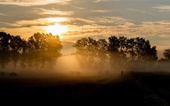 Fond d'écran Matin, le lever du soleil, nuages, arbres, brouillard
