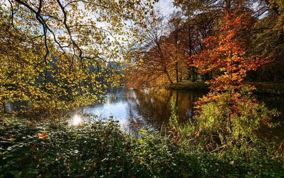 Обои Нидерланды природа пейзаж, осень, деревья, листья, пруд