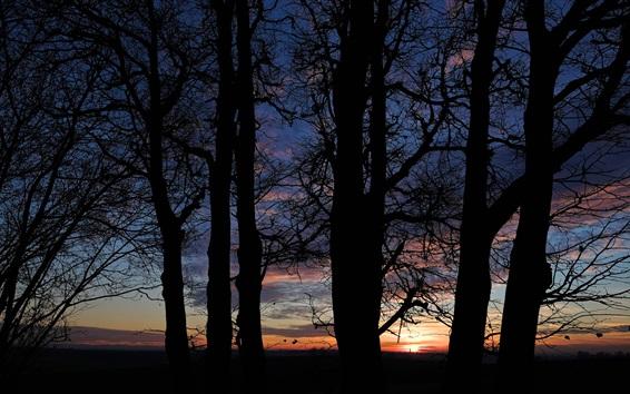 Обои Ночь, облака, закат, деревья силуэт