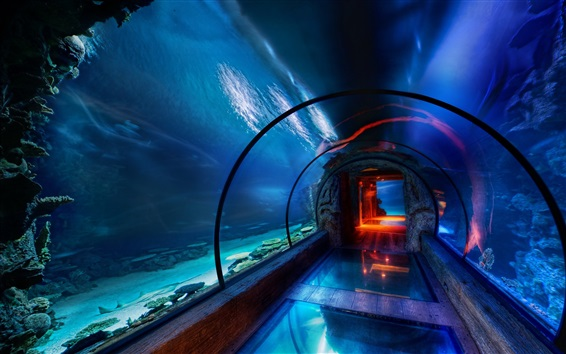 Wallpaper Ocean Park, aquarium, underwater sightseeing passage