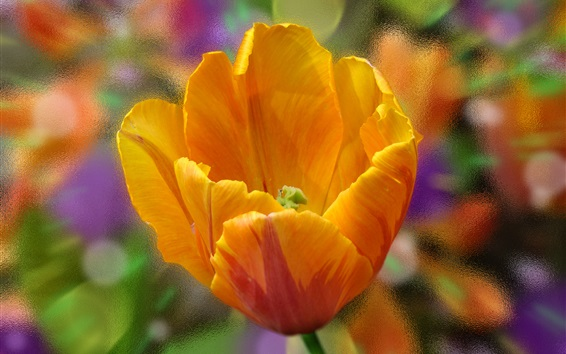 壁紙 オレンジ色のチューリップの花クローズアップ、ガラス、背景
