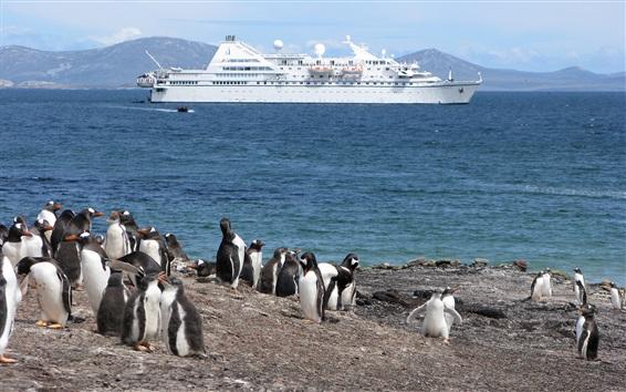 Papéis de Parede Penguin, costa, mar, navio