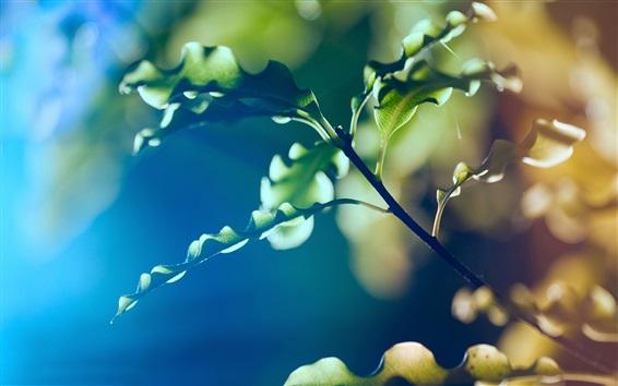Обои Растения макрофотографии, зеленые листья, боке