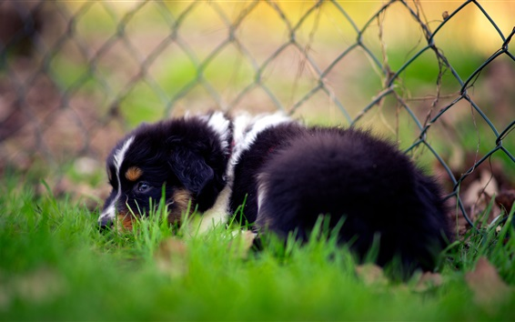 Wallpaper Sadness dog in grass, fence