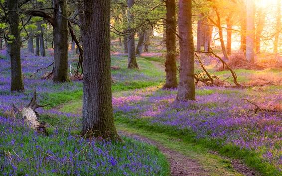 Fond d'écran Ecosse belle nature, la forêt, les arbres, l'herbe, les fleurs, le matin, les rayons du soleil