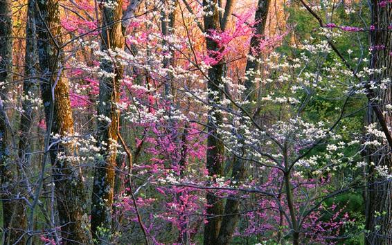 Fond d'écran Parc national de Shenandoah, fleurs, arbres, Virginie, États-Unis